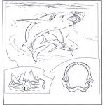 Zwierzęta - Biały rekin