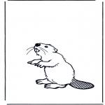 Zwierzęta - Bóbr
