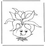 Różne - Cebulka kwiatowa