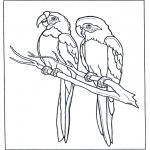 Zwierzęta - Dwie ary