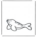 Zwierzęta - Foka 1