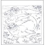 Zwierzęta - Foki