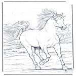 Zwierzęta - Galopujący Koń