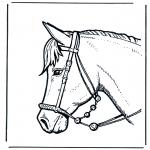 Zwierzęta - Głowa konia 2