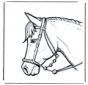 Głowa konia 2