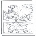 Zwierzęta - Hipopotam 1