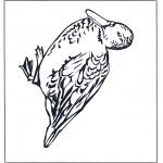 Zwierzęta - Kaczka 4