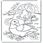 Zwierzęta - Kaczki