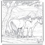 Zwierzęta - Kolorowanki koń
