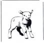 Kolorowanki owieczka