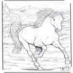 Zwierzęta - Koń 4