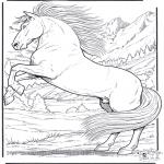 Zwierzęta - Koń 5