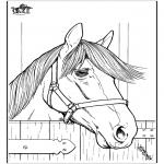 Zwierzęta - Koń 7