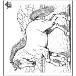 Zwierzęta - Koń 8