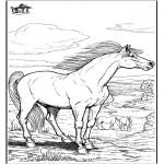 Zwierzęta - Koń 9