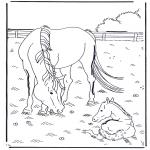 Zwierzęta - Koń i konik