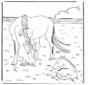Koń i konik