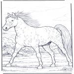 Zwierzęta - Koń w Galopie