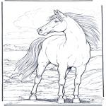 Zwierzęta - Koń w Wietrze