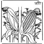 Różne - Kukurydza
