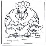 Zwierzęta - Kura z kurczakami