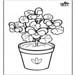 Różne - Kwiaty 6