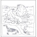 Zwierzęta - Lwy morskie