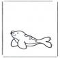 Mała foka