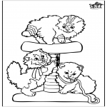 Zwierzęta - Małe koty