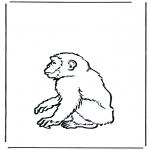 Zwierzęta - Małpa 2