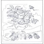 Zwierzęta - Motyle 2