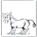 Zwierzęta - Osioł