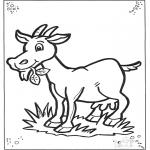Zwierzęta - Owca 2