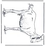 Zwierzęta - Owca