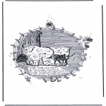 Zwierzęta - Owce
