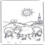 Zwierzęta - Owce w słońcu
