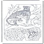 Zwierzęta - Pantera 1