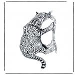 Zwierzęta - Pantera