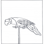 Zwierzęta - Papuga 3