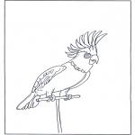 Zwierzęta - Papuga 4