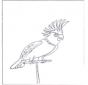 Papuga 4
