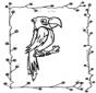 Papuga na patyku