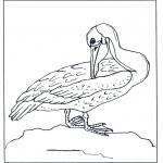 Zwierzęta - Pelikan