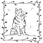Zwierzęta - Pies 4