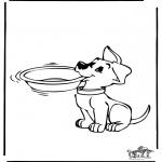 Zwierzęta - Pies