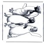 Zwierzęta - Pingwin 1