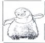 Pingwin 3