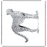 Zwierzęta - Polujący lampart
