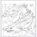 Zwierzęta - Rekiny