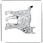 Zwierzęta - Ryś